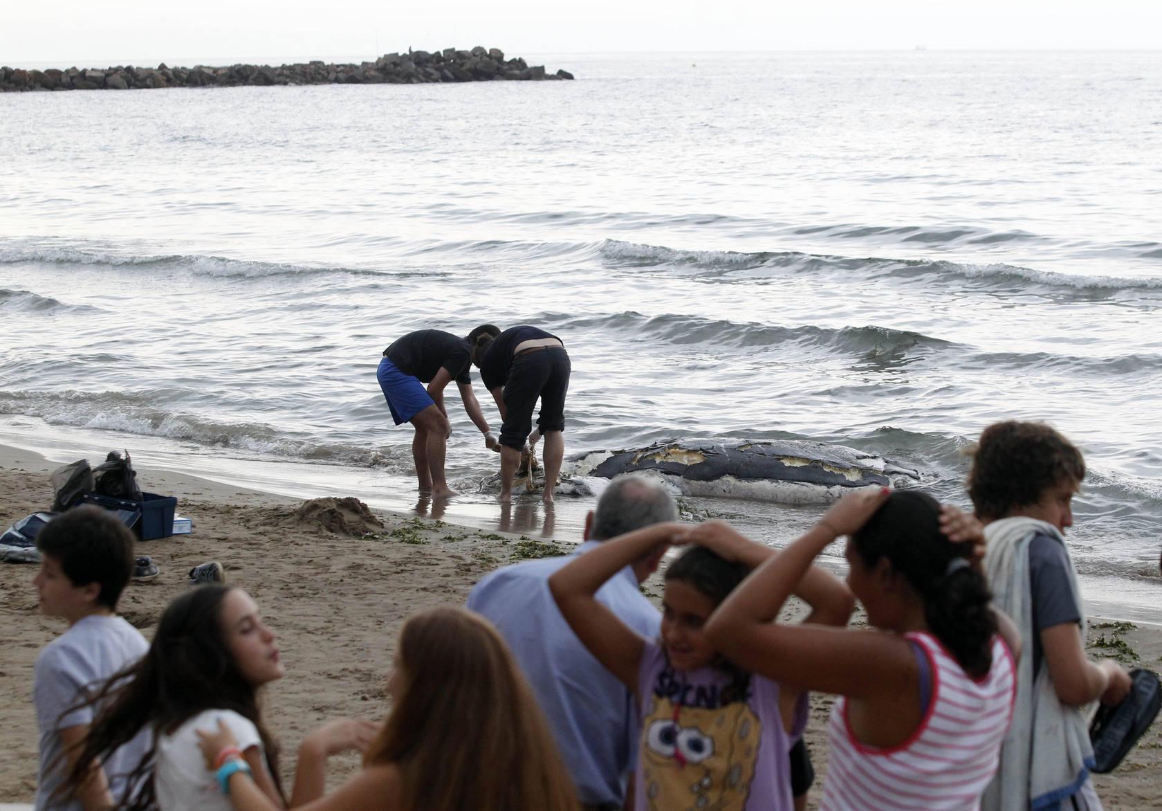 Encuentran un delfin varado en la playa de El Puig