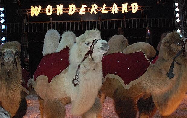 Nuevo espectáculo en Circo Wonderland