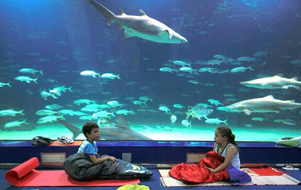 Durmiendo con tiburones en l'Oceanogràfic