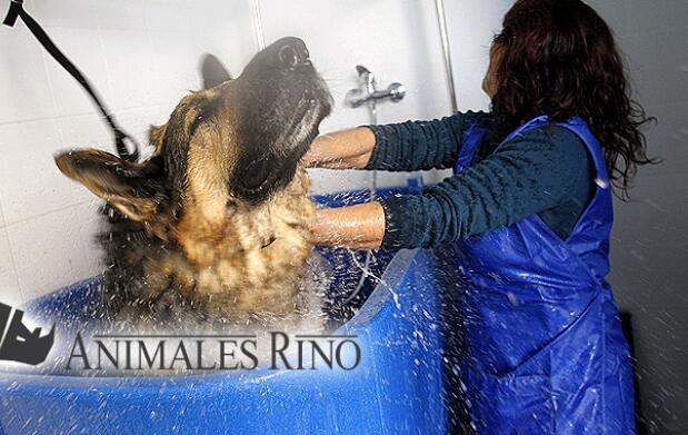 Autolavado de mascotas por 4 euros