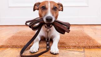 Curso online de cuidados del perro